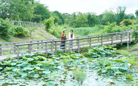 自然がいっぱいの散歩道、季節ごとに咲く花、そして牛